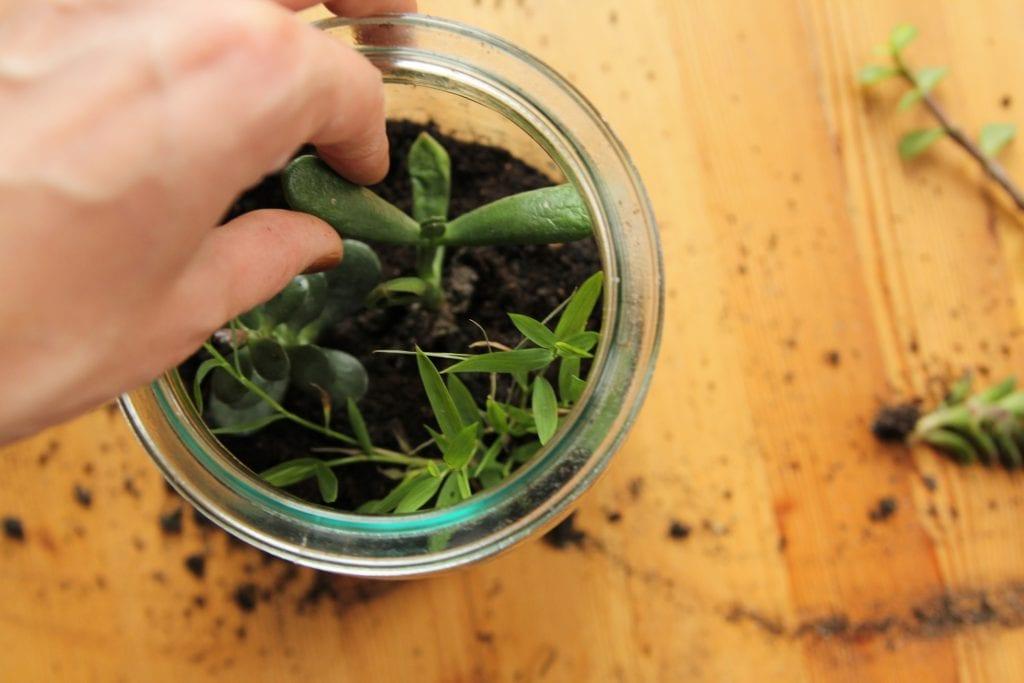 Dzikie Twory - umieszczanie roślin w ziemi1